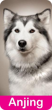 anti kutu jamur untuk anjing