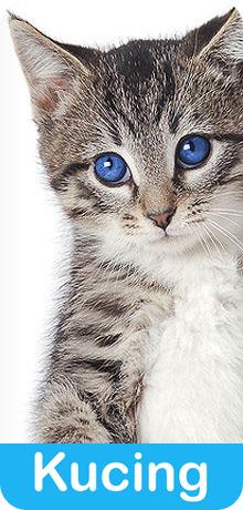 anti kutu jamur untuk kucing