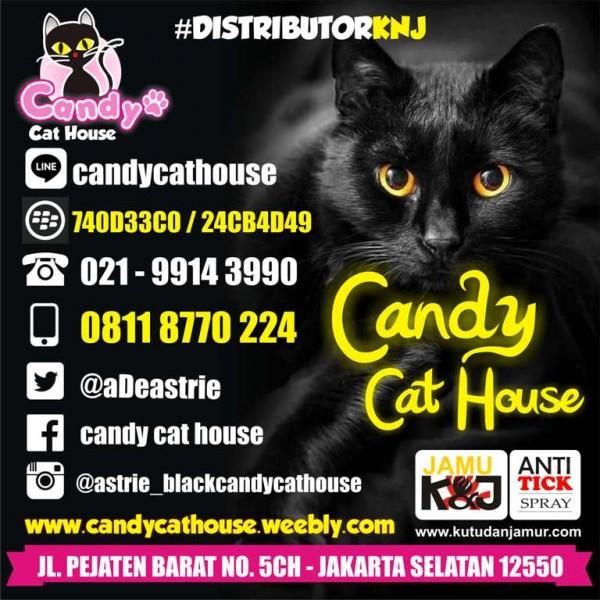 candy cat house jakarta